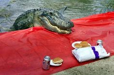 funny animal photos 4 Admit it, animals are pretty awesome (48 Photos)