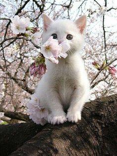 Eine Weiße Katze Riecht eine Weiße Blume. :)