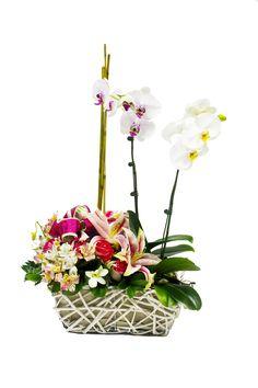 Plantas de orquideas, acompañadas con hermoso arreglo floral de Rosas y Lirios by Global Sunflower