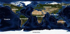 Ecozone World Map Central America, South America, Rainforests, Antarctica, Cartography, Pinterest Board, Perspective, Maps, Mosaic
