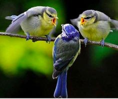 Cute and funny animals! This animal video compilation is just over ten minutes and all videos belong to Farm Animals! We will show you our baby/adult animals Kinds Of Birds, Love Birds, Beautiful Birds, Animals Beautiful, Animals And Pets, Baby Animals, Funny Animals, Cute Animals, Angry Birds