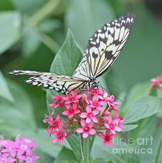 Title:  Paper Kite Butterfly - 2   Artist:  Kim Hojnacki   Medium:  Photograph - Photography