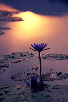 romantic and charming nature photographs! Landscape Wallpaper, Nature Wallpaper, Buddhism Wallpaper, Amazing Photography, Nature Photography, Image Nature, Sunset Photos, Flowers Nature, Water Lilies