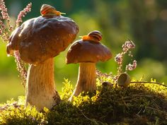 Getting Shroomy with Bruce! A Magical Miniature World Of Snails By Vyacheslav Mishchenko