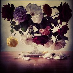 Roses from my garden. Thursday 16th August 2012. #rose - @showstudio_nick_knight- #webstagram