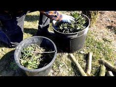 How to make a slurry from nettles?