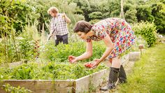 Growing vegetables is much easier in loose soil, but building your own elevated plot doesn't have to be difficult.