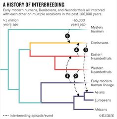 A history of interbreeding between Neanderthals, Denisovans and modern humans.
