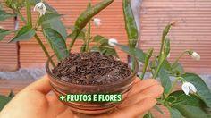 Poderoso Adubo Líquido Completo (Use do plantio até a colheita) - YouTube
