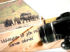 Fotoğraflarla doğa günlüğü: Filler Video