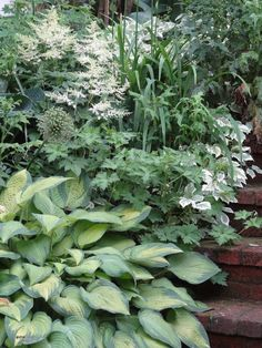 Deborah's garden in Massachusetts--click through to see more of this garden.