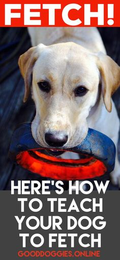 Here's how to Teach Your Dog to Fetch. Learn how to play this classic game with your dog. #dogs #dogtraining #GoodDoggies