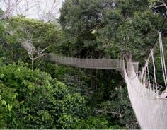 Canopy Walkway, I would love to go on one someday!