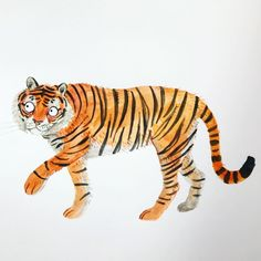 """Lorna Scobie on Instagram: """"Tiger 🐯  #illustration #drawing #tiger #bigcat #cat #🐯"""" Cat Character, Character Design, Tiger Illustration, Tiger Art, Big Cats, Drawings, Pictures, Instagram, Stripes"""