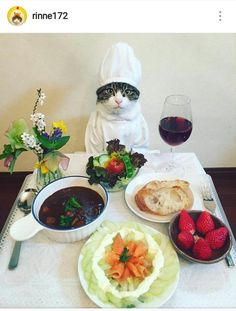 Even Dog People Will Fall In Love With This Cosplaying Cat Chef Sogar Hundeleute werden sich in diesen Cosplaying Cat Chef verlieben I Love Cats, Cute Cats, Funny Cats, Catch The Cat, Cat Dressed Up, Cat Cosplay, Japanese Cat, Neko Cat, Cat Dresses