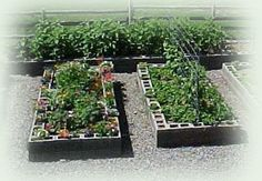On a side note...: Cinder block raised garden