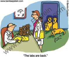 ❤ Fluffy Puppies Fine Art & Blog❤ : The Labs Are Back ~ Surgery is schedule ~ Photos