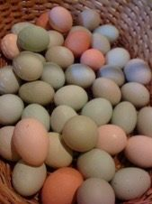 Yenni Ranch   Farm Fresh Eggs Colored by Nature Green, Blue, & Pink
