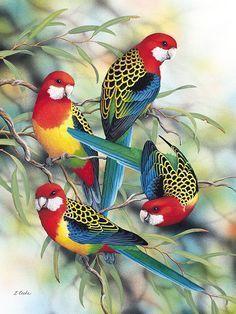 'Australian Eastern Rosellas', by Lyn Cookewww. Diamond Drawing, 5d Diamond Painting, African Grey Parrot, Australian Animals, Colorful Birds, Colorful Parrots, Wildlife Art, Bird Prints, Christmas Art