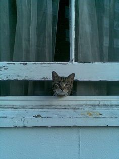 """Most cats when they are Out want be In, and vice versa, and often simultaneously."""" --Carl Van Vechten"""
