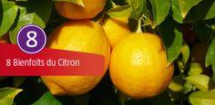 8 Bienfaits du Citron, expliqué par Aurélia HUCHET, diététicienne à la thalasso de Pornic