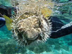 透明度がすごい!冬の沖縄の海は楽しいですね! - http://www.natural-blue.net/blog/info_10131.html