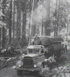 Vintage photo! Hardworking guys chopping down trees and loading them up on a Peterbilt! #Peterbilt #ThePeteStore