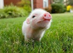 cute baby animals - Buscar con Google
