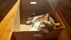 Abby enjoying the evening sunshine in a new box