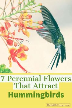 Who doesn't want to build a hummingbird garden in their backyard? 7 of their fav perennial flowers are shown here. Great ideas for you to design your own hummingbird garden!