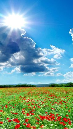 Iphone Wallpapers Seasons summer fields scenery poppies sky clouds sun nature Hd - Best Home Design Ideas