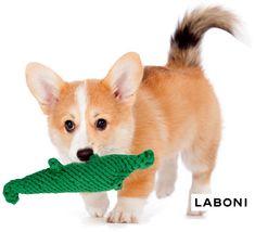 LABONI - Designer Dog Products: Handmade Dog Toy Kalli Krokodil from organic dental care cotton Dog Cakes, Dog Paintings, Dog Houses, Pictures To Paint, Dog Design, Dog Art, Dog Toys, Funny Dogs, Corgi