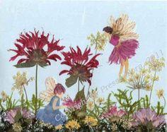 Pressed Flower Art Pictures - Pressed Flora   garden fairy