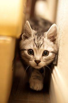 So cute cat!!!