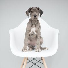 Grace & Goose. Dog Photography Studio in Dallas, Texas.