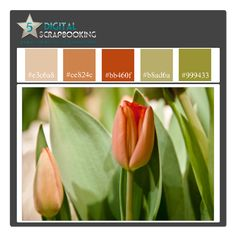 Or maybe this burnt orange since I already have a green colored wall and tan so it'll blend nicely.