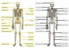 krabbelwiese: Der menschliche Körper