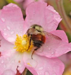 How To: Make a Bee Garden.    Help out these rotund pollinators by providing them with the food and habitat that is disappearing and threatening.