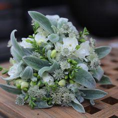 Succulents, Flowers, Plants, Instagram, Succulent Plants, Plant, Royal Icing Flowers, Flower, Florals