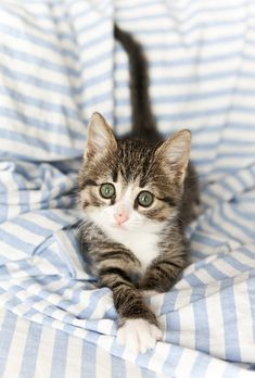 "Adorable! (=^.^=) Thanks, Pinterest Pinners, for stopping by, viewing, re-pinning, & following my boards.  Have a beautiful day! ^..^ and ""Feel free to share on Pinterest ^..^   #catsandme #cats"