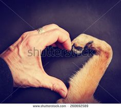 Dog-like mammals Stock Photos, Images, & Pictures | Shutterstock
