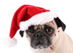 Groovy 1000 Images About Christmas Pugs On Pinterest Pug Christmas Easy Diy Christmas Decorations Tissureus