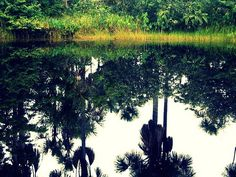 Colacreek Suriname