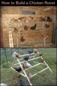 Building A DIY Chicken Coop If you've never had a flock of chickens and are considering it, then you might actually enjoy the process. It can be a lot of fun to raise chickens but good planning ahead of building your chicken coop w Cheap Chicken Coops, Portable Chicken Coop, Best Chicken Coop, Backyard Chicken Coops, Chicken Coop Plans, Building A Chicken Coop, Chickens Backyard, Pet Chickens, Raising Chickens