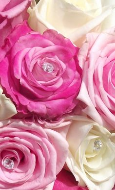 The Rose Garden #pink #roses