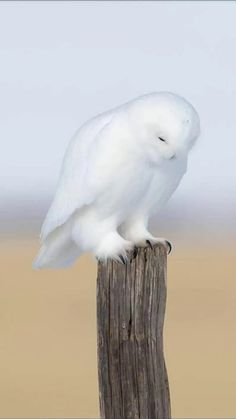 Untitled Nature Animals, Animals And Pets, Cute Animals, Wild Animals, Funny Animals, Owl Photos, Owl Pictures, Cute Birds, Pretty Birds