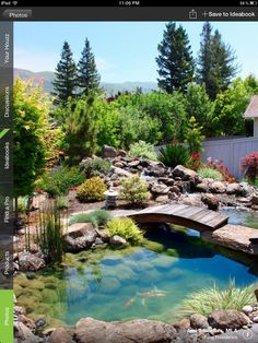 Amazing backyard pond