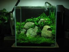 aquascaping / planted nano tank