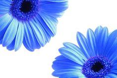 Kwiaty, Płatki, Niebieski, Wiosna