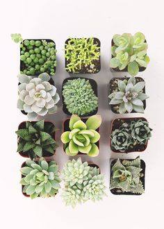Succulents are great for home terrariums or buy in bulk for creative wedding favors. Afloral is now selling hardy live succulent and house plants with a creative assortment of planters and pots. Shop Afloral, your floral decorating company. Succulents Wallpaper, Cacti And Succulents, Planting Succulents, Planting Flowers, Succulents Drawing, Propagating Succulents, Succulents Painting, Unusual Plants, Cool Plants